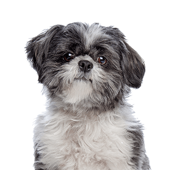 Cute dog looking toward the new SwissGear Pet Carrier